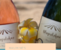 Top 5 Beach Wines for National Beach Day